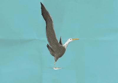 Operación Albatros
